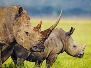 http://www.animalphoto.tk/rhinoceros-photos.html